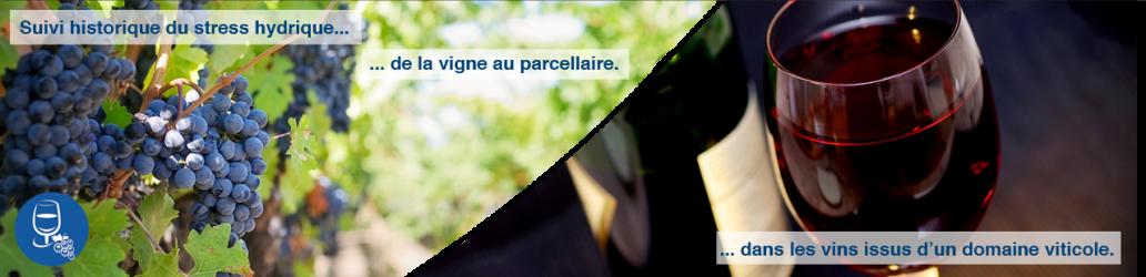 vigne-et-vin8