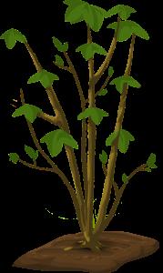 Systeme eau-sol-plante